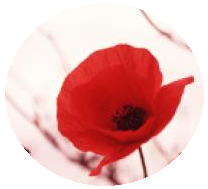 Remembrance Day pin-back button, Rememberance Day button, poppy button