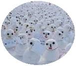 snowman button, snowman pin-back button, snowmen button
